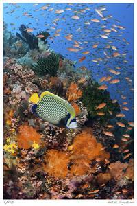 Reef Scenic 8 by Jones-Shimlock