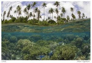 Reef Scenic Split Image by Jones-Shimlock