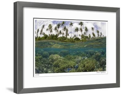 Reef Scenic Split Image