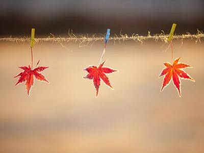 Fallen leaves hanging the rope