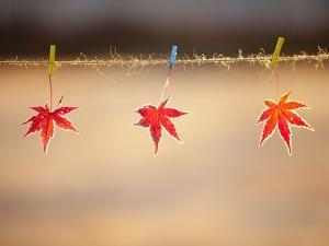 Fallen leaves hanging the rope by JongBeom Kim