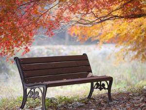 Lonely bench under the autumn tree by JongBeom Kim