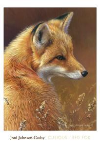 Curious: Red Fox by Joni Johnson-godsy
