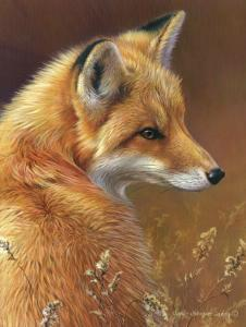 Curious: Red Fox by Joni Johnson-godsy