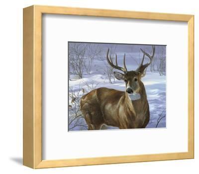 Through My Window: Whitetail Deer