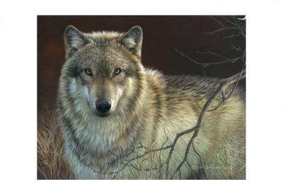 Uninterrupted Stare: Gray Wolf