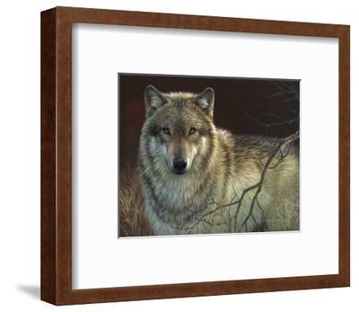 Uninterrupted Stare: Gray Wolf