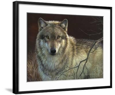 Uninterrupted Stare - Gray Wolf