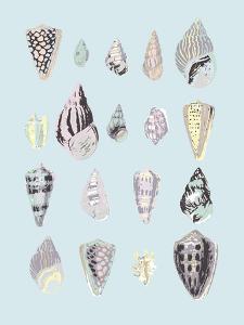 Graphic Seashells II by Joni Whyte