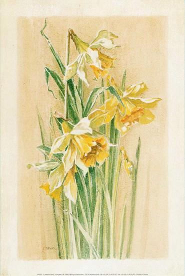 Jonquilles I-Laurence David-Art Print