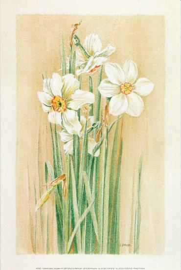 Jonquilles II-Laurence David-Art Print