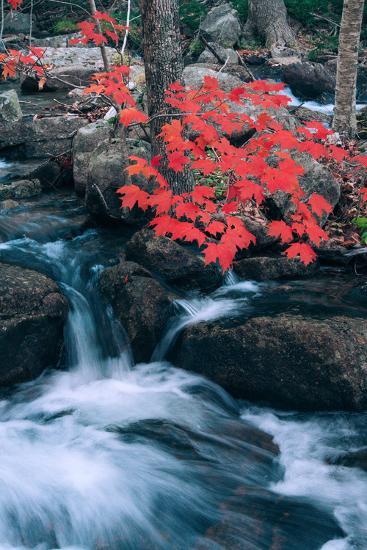 Jordan Stream in Autumn I, Maine Coast--Photographic Print