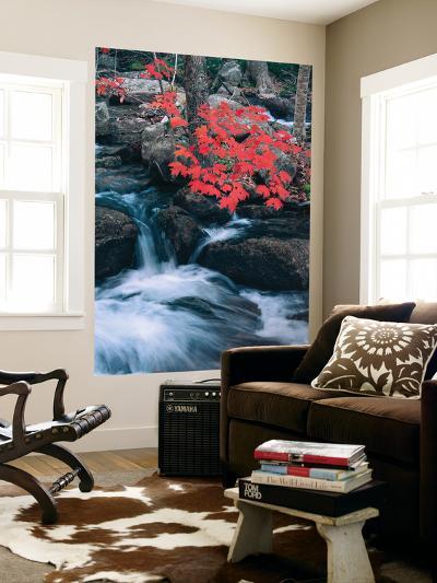 Jordan Stream in Autumn I, Maine Coast-Vincent James-Wall Mural