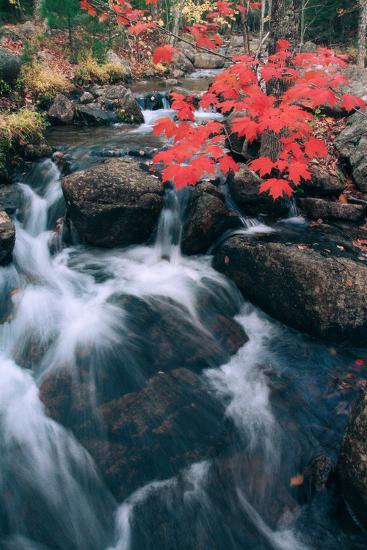 Jordan Stream in Autumn II, Maine Coast--Photographic Print