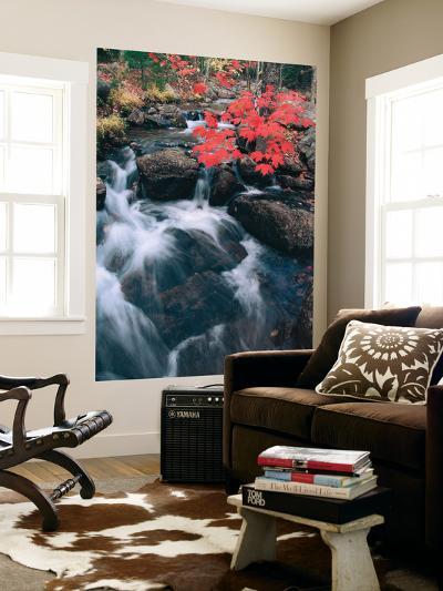 Jordan Stream in Autumn II, Maine Coast-Vincent James-Wall Mural