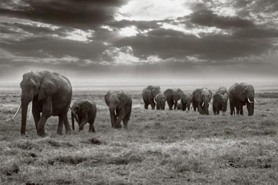 Amboseli Elephants by Jorge Llovet