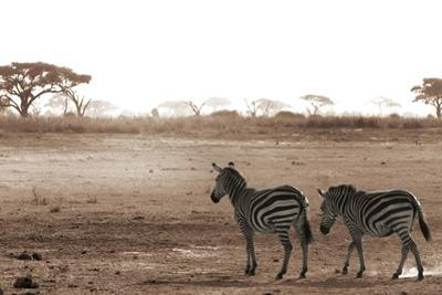 Crossing the African Plains by Jorge Llovet