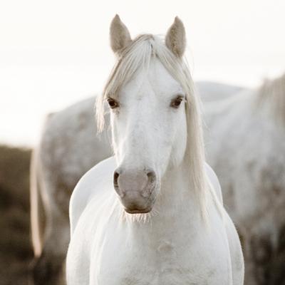 Horse by Jorge Llovet