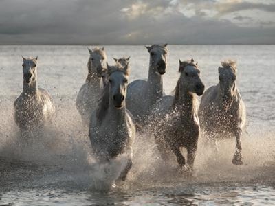 Horses Landing at the Beach by Jorge Llovet