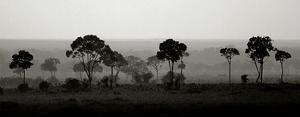 Tree Line by Jorge Llovet