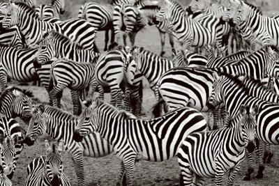 Zebra Abstraction by Jorge Llovet