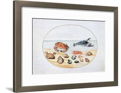 Shells and Shellfish, 16th Century