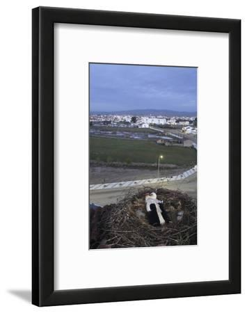 White Stork (Ciconia Ciconia) in Nest Overlooking Town