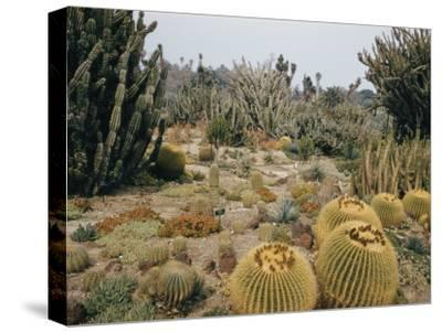 A Portion of the Desert Plant Collection in Huntington Botanic Gardens