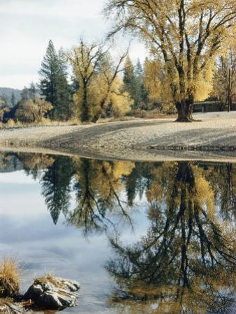 Autumn Leaves Growing Along a Gravel Riverbank Add Color to the Sacramento River