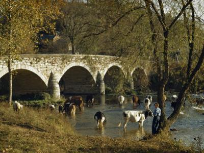 Boy Fishes in a River Near Wading Cows and Old Stone Bridge