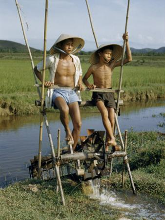 Father and Son Irrigate Rice Fields by Pedaling an Irrigation Machine