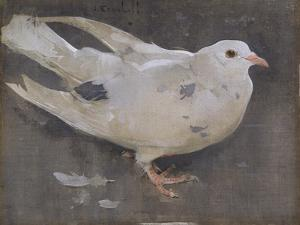 The Pigeon by Joseph Crawhall