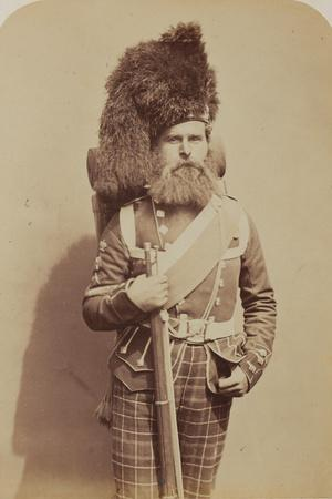 Colour-Sergeant Taylor, 72nd (Duke of Albany's Own Highlanders) Regiment of Foot