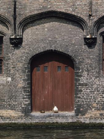 Two Ducks Sit in Doorway That Opens Directly onto a Canal