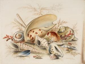 Study of Sea Shells, 1876 by Joseph Smith