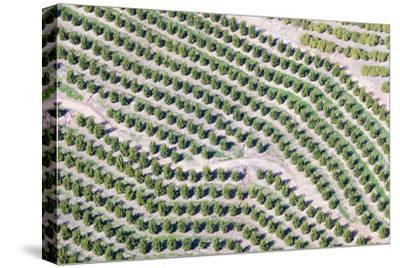 Aerial View of Orange Grove in Ventura County, Ojai, California