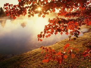 Sunrise Through Autumn Leaves by Joseph Sohm