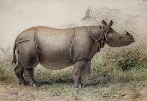 Javan Rhinoceros, 1874 by Joseph Wolf