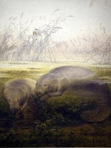 Manatee, 1879 by Joseph Wolf