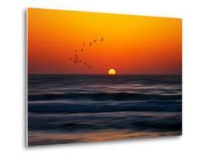 Birds at Sunset by Josh Adamski