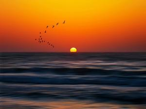 Birds at Sunset by Josh Adamski