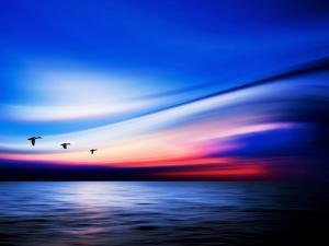 Blue Geese by Josh Adamski