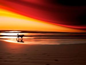 Dog at Sunset by Josh Adamski