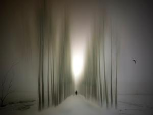 The Avenue by Josh Adamski