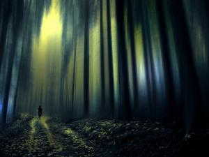 Woodland Walk by Josh Adamski