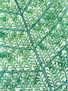 Fern leaf vein by Josh Westrich