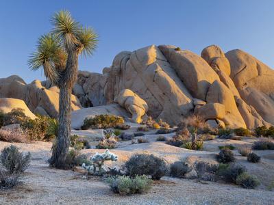 https://imgc.artprintimages.com/img/print/joshua-tree-and-boulder-formation-joshua-tree-np-california-usa_u-l-pn6unp0.jpg?p=0