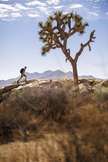 Joshua Tree National Park, California, USA: A Male Hiker Walking Along Behind A Joshua Tree-Axel Brunst-Photographic Print