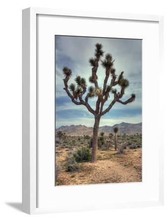 Joshua Tree Scene-Vincent James-Framed Photographic Print