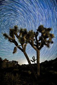 Joshua Tree Star Trails, 2017
